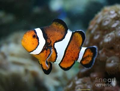 Clown Fish Original by Sherrie Winstead