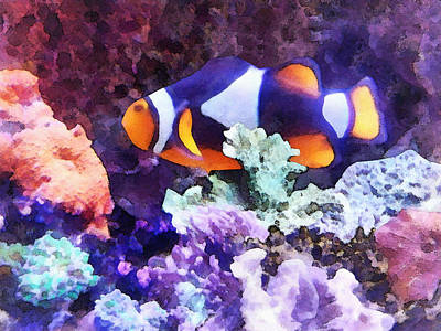 Sea Life Photograph - Clownfish And Coral by Susan Savad