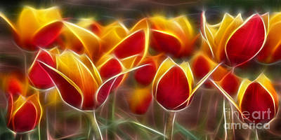 Cluisiana Tulips Fractal Art Print by Peter Piatt