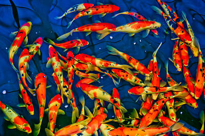Photograph - Cluster Of Koi by Chua  ChinLeng
