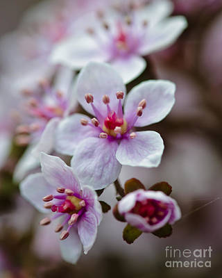 Photograph - Cluster Of Spring Flowers.... by Christine Kapler