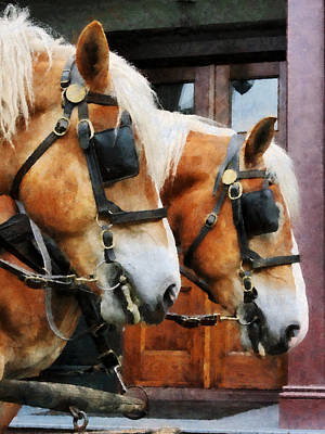Photograph - Clydesdale Closeup by Susan Savad