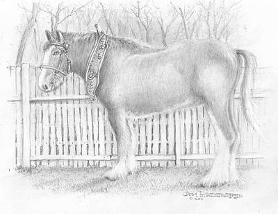 Clydesdale Drawing - Clydesdale Horse by Jim Hubbard