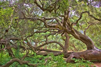 Photograph - Coast Live Oak by Heidi Smith
