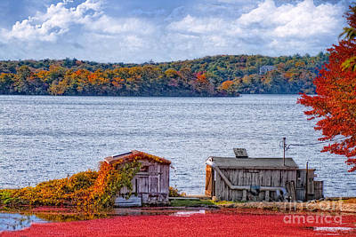 Photograph - Coastal Cranberries by Gina Cormier
