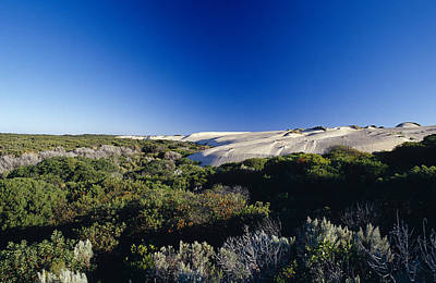 Tea Tree Photograph - Coastal Tea Tree Shrubs And White Sand by Jason Edwards