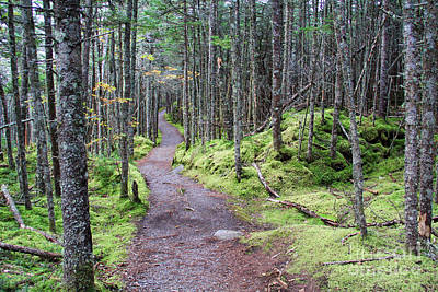 Quoddy Head State Park Photograph - Coastal Trail At Quoddy Head State Park by Jack Schultz