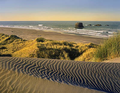 Coastline Pistol River Beach Oregon Art Print by Tim Fitzharris
