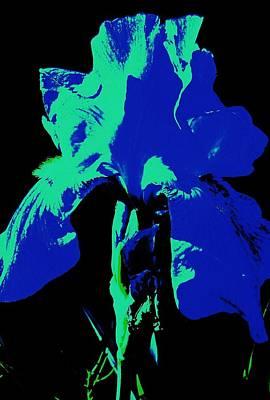 Cobalt Iris Art Print by Todd Sherlock