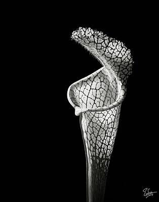 Cobra Lily In Black And White Art Print