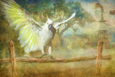 Cockatoo Dreaming Art Print by Trudi Simmonds