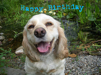 Puppies Photograph - Cocker Spaniel Birthday by Aimee L Maher Photography and Art Visit ALMGallerydotcom