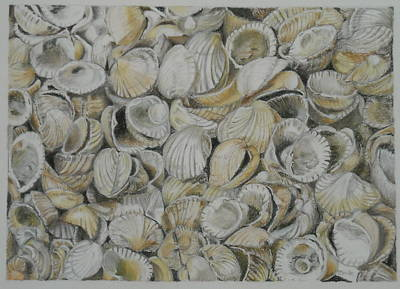 Pastel - Cockle Shells by Teresa Smith