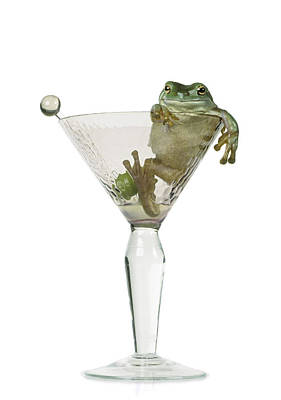 Cocktail Frog Art Print by Darwin Wiggett