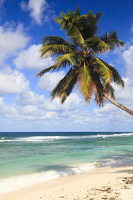 Y120817 Photograph - Coconut Palm At Anse Parnel, Mahe, Seychelles by F. Lukasseck