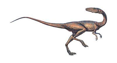 Coelophysis Photograph - Coelophysis Dinosaur, Computer Artwork by Joe Tucciarone