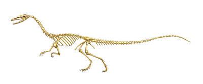 Coelophysis Photograph - Coelophysis Dinosaur Skeleton, Art by Gary Hincks