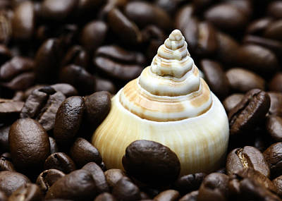 Kaffee Photograph - Coffee Beans Snail by Falko Follert