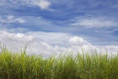 Grass And Sky With Clouds Art Print