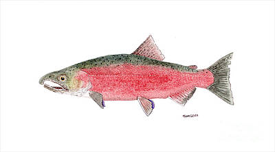 Painting - Coho Or Silver Salmon In Spawning Colors by Thom Glace