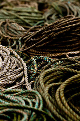 Photograph - Coiled by Justin Albrecht