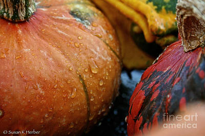 Photograph - Cold And Wet by Susan Herber
