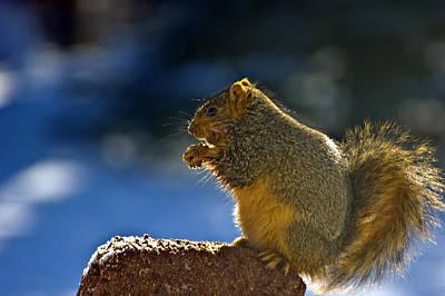 Rural Photograph - Cold Famished Squirrel by LeeAnn McLaneGoetz McLaneGoetzStudioLLCcom
