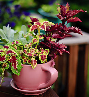 Coleus Collection Art Print by Michael Putnam