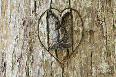 Funny Tree Shapes Photograph - Collaborative Art by Theresa Willingham