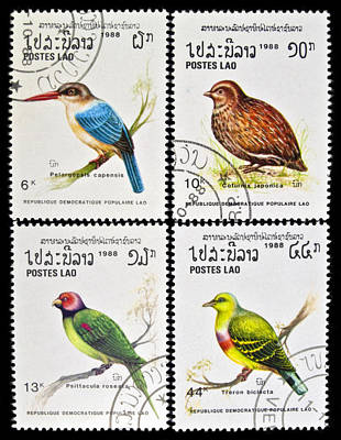 Tropical Stamps Photograph - Collection Of Birds Stamps. by Fernando Barozza