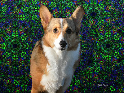 Tye Dye Photograph - Collie by Bill Cannon