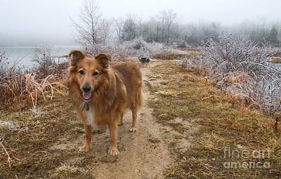 Photograph - Collie On Winter Trail by Jeannette Hunt