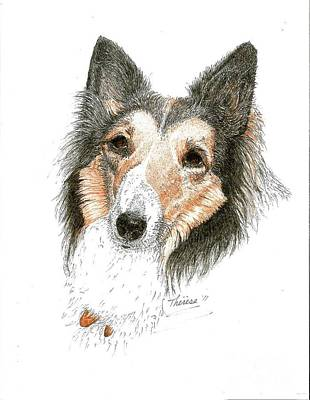 Drawing - Collie by Bill Hubbard