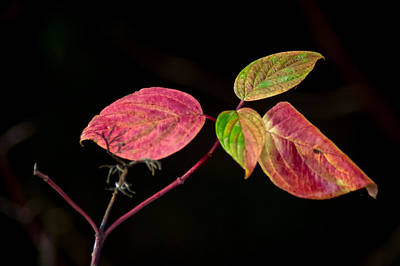 Photograph - Color Coordination - Autumn Leaves by Bill Pevlor