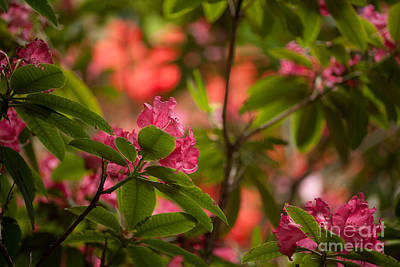 Rhodie Photograph - Color In The Jungle by Mike Reid