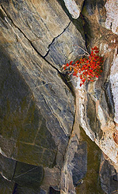 Photograph - Color In The Rocks by James Steele