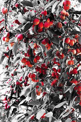 Color Of Apples Art Print by Matt Lewis