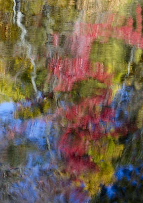 Photograph - Color Palette by Susan Candelario