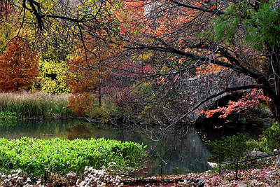 Photograph - Color Splash In Central Park by Lorraine Devon Wilke