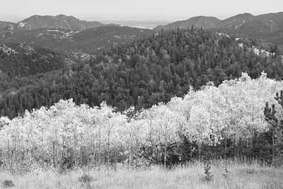 Space Art Photograph - Colorado Aspen View Looking Out Bw by James BO  Insogna