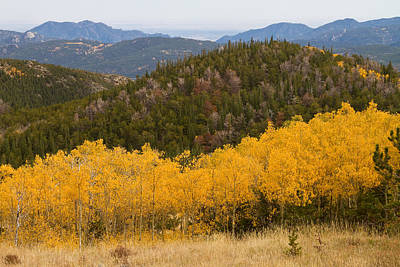 Rocky Mountain Photograph - Colorado Aspen View Looking Out by James BO  Insogna