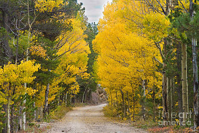 Photograph - Colorado Autumn Aspen Road Boulder County by James BO  Insogna