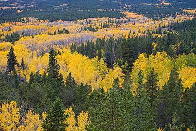 Colorado Autumn Aspens Boulder County  Art Print by James BO  Insogna