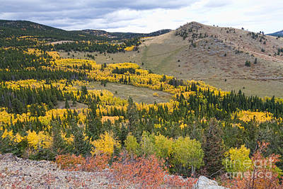 Colorado Autumn Aspens Colors Art Print by James BO  Insogna