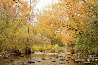Colorado Autumn Creek Art Print by James BO  Insogna
