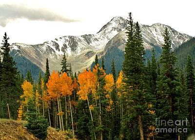 Autumn Scene Photograph - Colorado Colors by Marilyn Smith