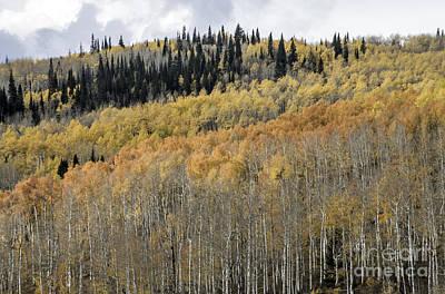 Photograph - Colorado Gold II by David Waldrop