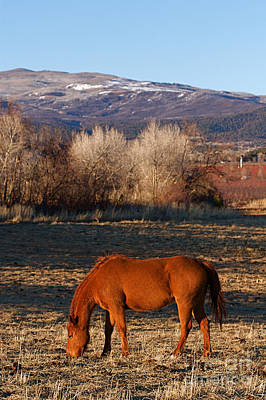 Colorado Horse Ranch At Sunset Near The Rocky Mountains Art Print by ELITE IMAGE photography By Chad McDermott