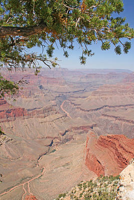 Colorado River Grand Canyon National Park Usa Arizona Art Print by Audrey Campion
