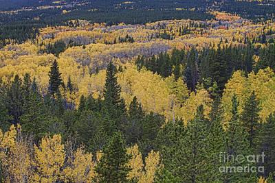 Aspen Trees Photograph - Colorado Rocky Mountain Autumn Season High by James BO  Insogna